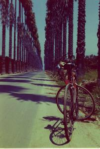 palmsandbike