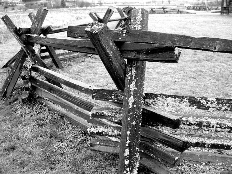 moldy fencing at fort vancouver