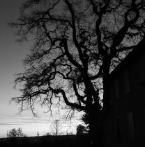spooky sunset tree