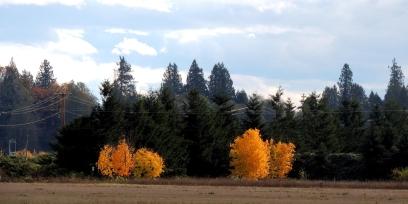 fall along a tree line