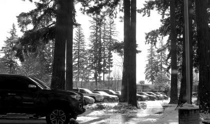trees, vehicles, snow