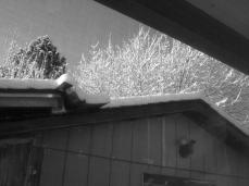 snowed tree and roof out my bedroom window. even in black and white snow is spectacular!