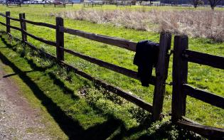 coat and fence 2 at fort vancouver, washington. while pardner was out checking the lower forty the scene turned to color!