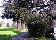 vancouver barracks in spring color this is more like it, nice walkway