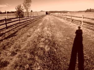 and the road with shadow goes on forever