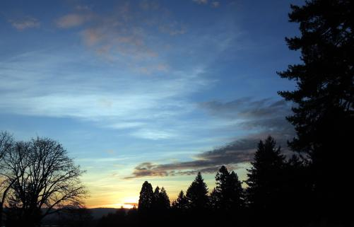 silhouettes of the mighty Douglas fir frame yet another profound sunset