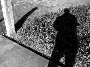 shadows across the yard