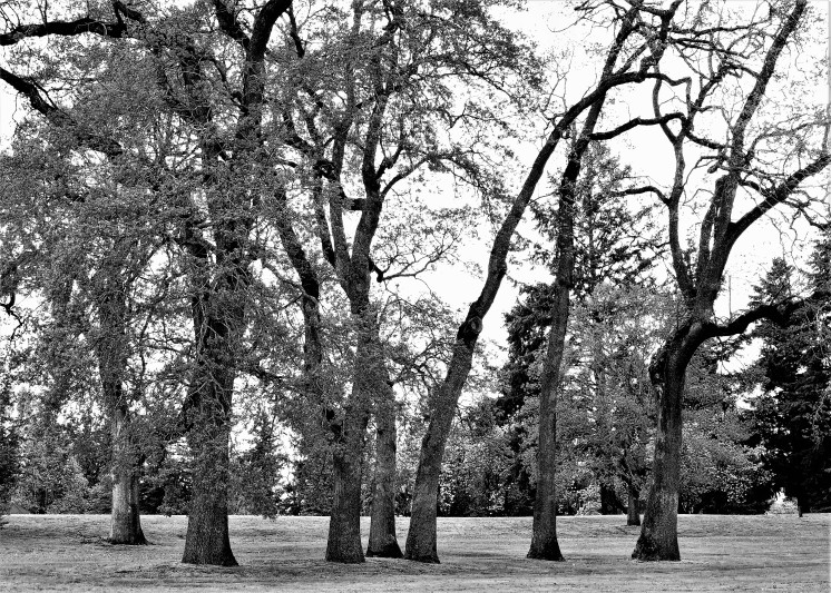 Now, this is a bit odd as I approached this group of twisting, bending trees I thought a friend I once worked with in California. She loved being different and on her right hand let her fingernails grow, their twisted figuration came to my mind with this group of trees