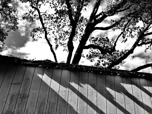 Spooky shadows and a towering oak tree over this wooden shed that has seen better times. What caught my is the detoiring roof and side, the sun shone just properly. SNAP!