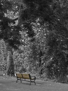 The bench stands out against the trees.
